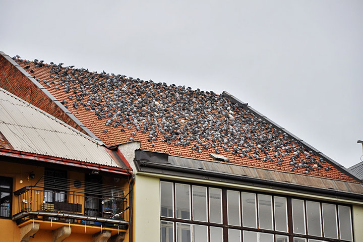 A2B Pest Control are able to install spikes to deter birds from roofs in Shildon.