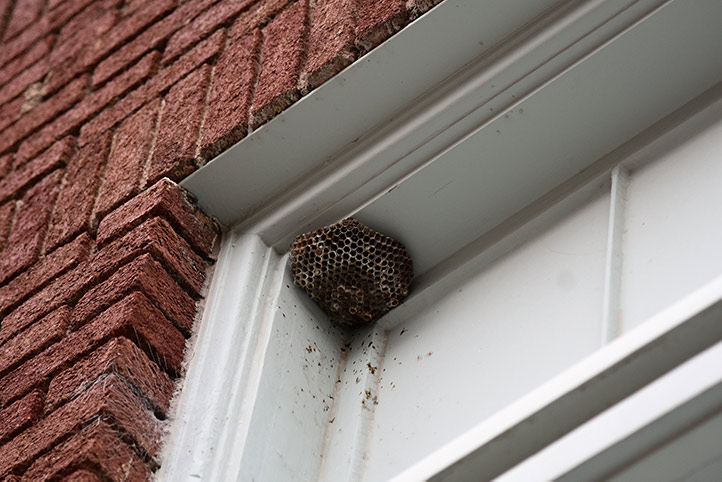 We provide a wasp nest removal service for domestic and commercial properties in Shildon.